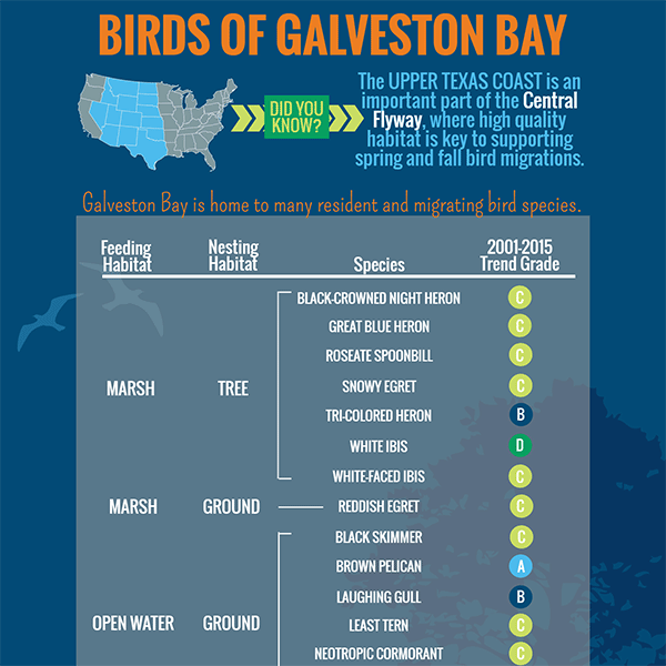 Birds of Galveston Bay