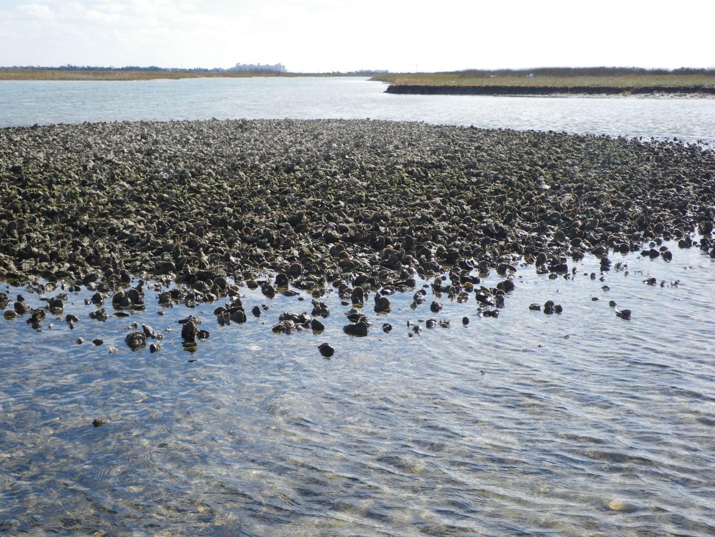 Is It Safe to Swim In Galveston Bay? | Galveston Bay Report Card