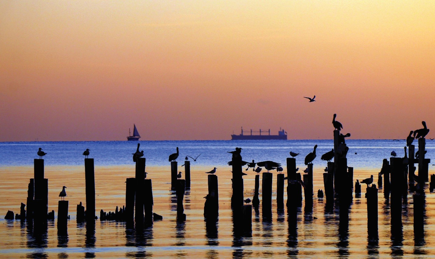 Photo taken by Galveston Bay Foundation volunteer, Gene Fissler perfectly captures the importance of the Bay.