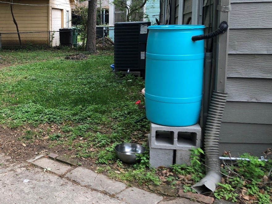 Rain barrel set up to receive water from a gutter downspout.